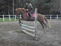 häst hoppar